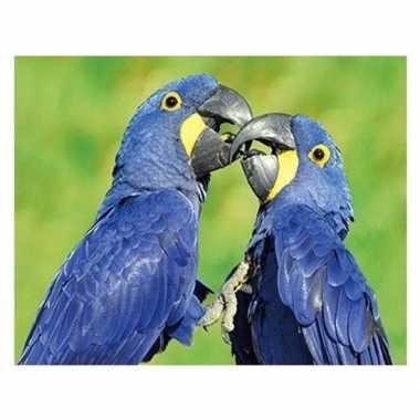 Dieren magneet 3d ara papegaai